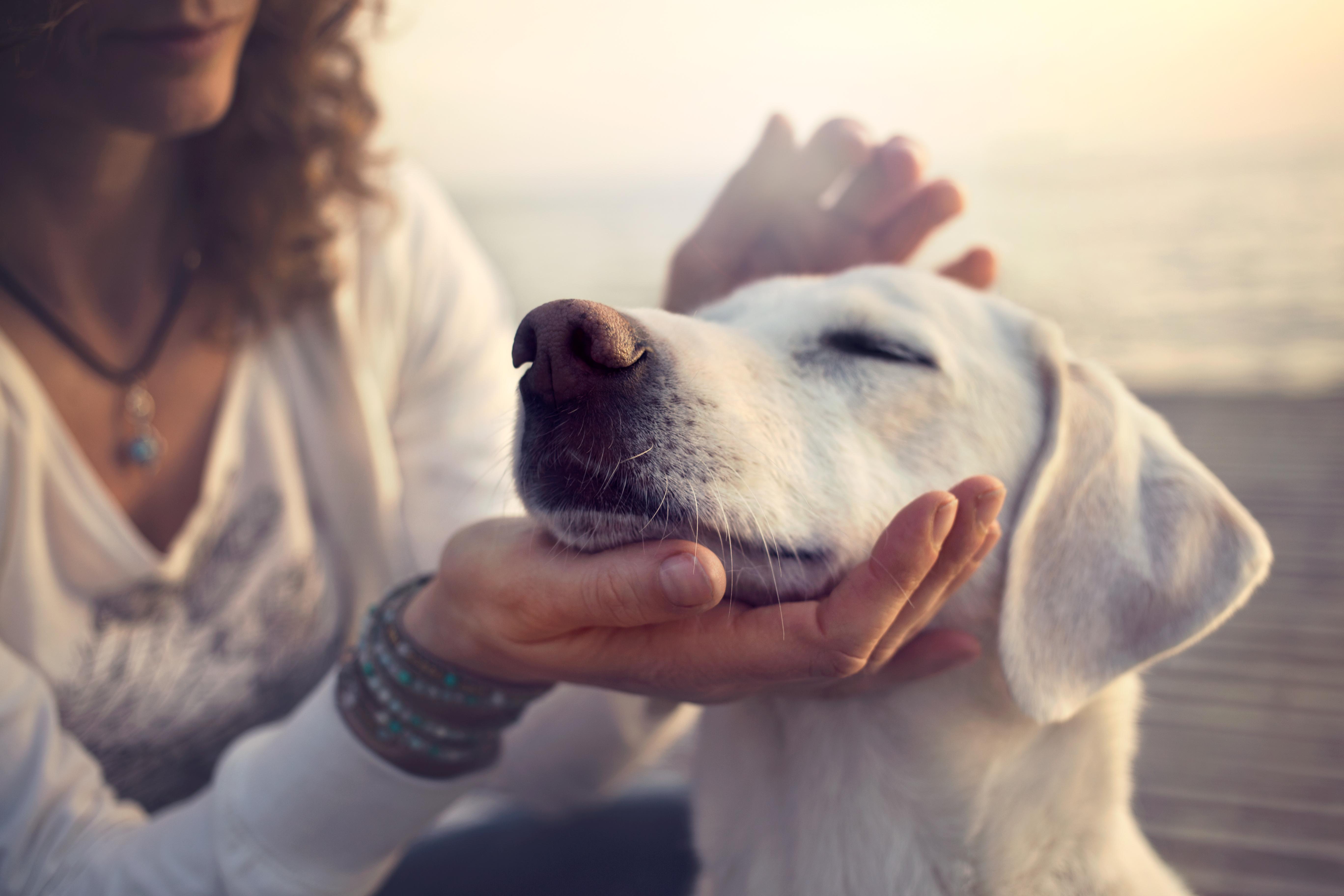 Hundetraining_Hundeschule