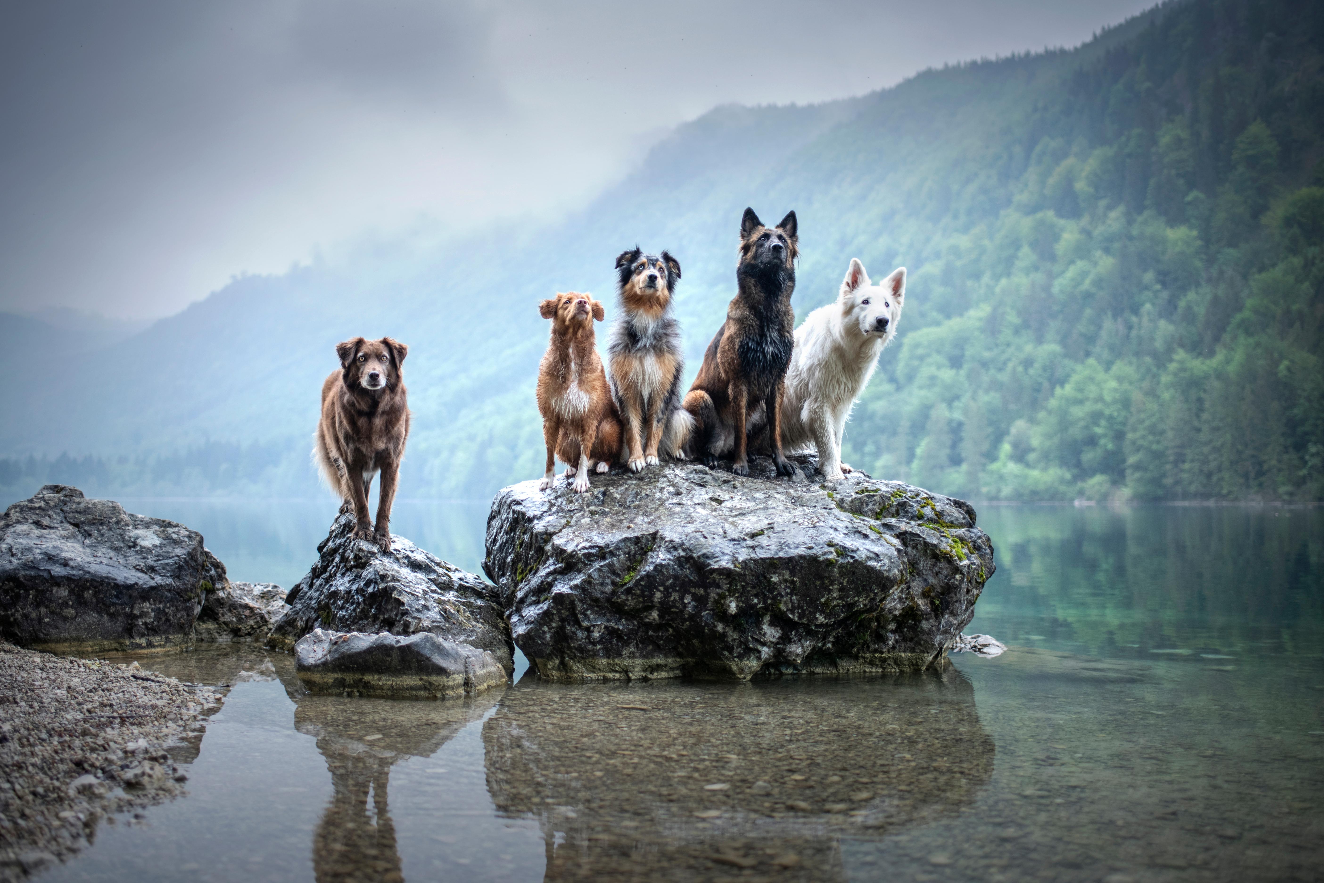 Kaufberatung_Hundetraining_Hundeschule