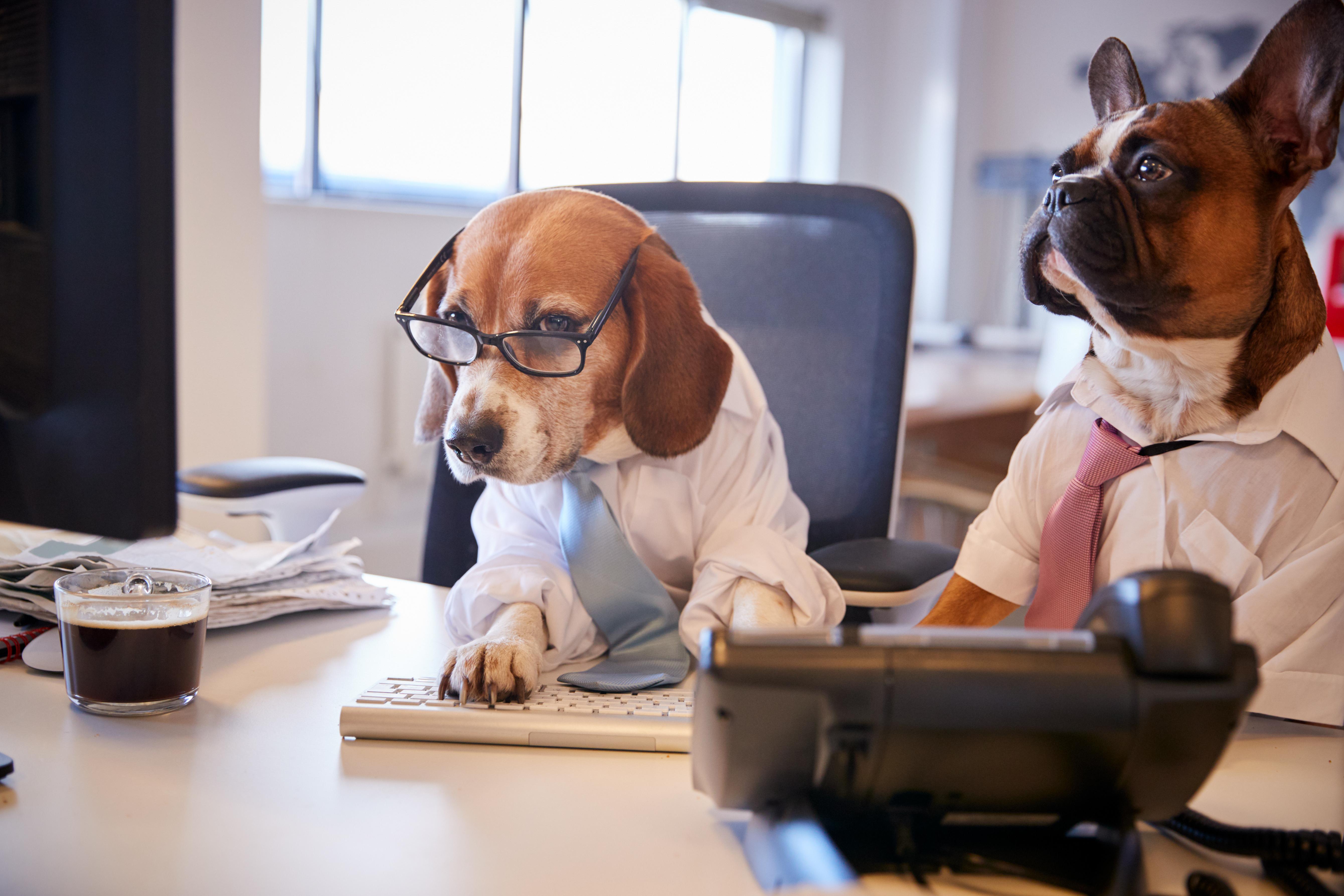 Kursangebote_Hundeschule_Hundetraining